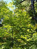 Green bright tree