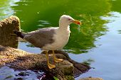 Seagull Bird Standing Near A Lake