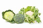 Cabbage, Cauliflower And Broccoli