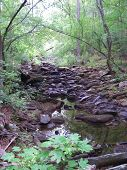 Streambed In The Forest