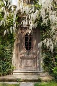 old door at the wisteria