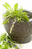 Fresh herbs in mortar