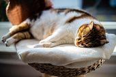 Cute Cat Sleeping Profoundly On The Cat-tree Near The Window Having Sweet Feline Dreams poster