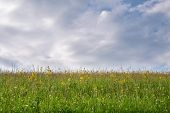 Pasture Of Blooming Flower Meadows With Cloudy Sky With Copy Space For Design poster