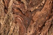 Willow Bark Texture, Thick Bark Old Tree poster