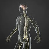 foto of chiropractic  - An Illustration of a man - JPG