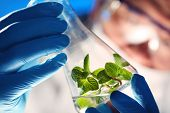 image of pharmaceuticals  - Scientist holding and examining samples with plants - JPG
