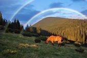 Pferd Weiden in die Berge und einen schönen Regenbogen