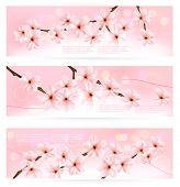 Three spring banners with blossoming tree brunch with spring flowers. Vector.