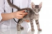 stock photo of working animal  - Veterinarian examining a kitten isolated on white - JPG