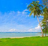 Green grass, palm tree, sea, beach and blue sky
