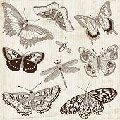 stock photo of butterfly  - Vector Set - JPG