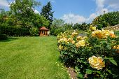 pic of gazebo  - Beautiful garden with blooming roses and a small gazebo - JPG