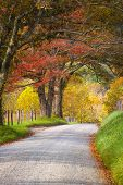 foto of cade  - Fall foliage on display on Sparks Road in Cade - JPG
