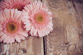 Pink Gerberas On A Wooden Board