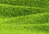 Green leafs wave