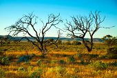 picture of aborigines  - Australian desert - JPG