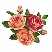 Roses bouquet on white. Vector illustration.