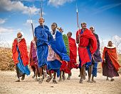 TANZANIA, AFRICA-FEBRUARY  9, 2014: Masai warriors dancing traditional jumps as cultural ceremony,re