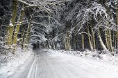 Night Road In Winter Forest