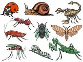stock photo of caterpillar cartoon  - set of sketch illustration of different insects - JPG