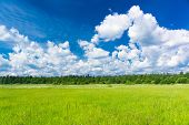 Grass Lawn Vibrant Springtime