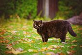 beautiful brown cat walking in fallen leaves