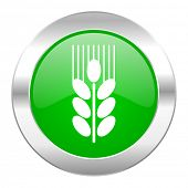 grain green circle chrome web icon isolated