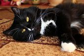 Black Cat Lolling About On The Carpet