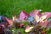 Colorful autumnal background