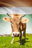Cow With Flag On Background Series - India