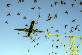Heathrow Airport and Bird Disturbance