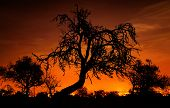 Silhouettes Of Trees Over The Red Sky