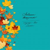 Autumn maple leaves design on green background. Copy space