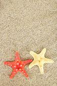 Starfish on sea sand background