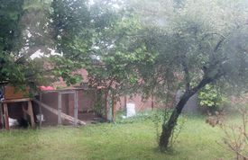 stock photo of pene  - Chickens pened in yard with two trees. ** Note: Soft Focus at 100%, best at smaller sizes - JPG