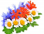 Beautiful Wildflowers, Chamomiles, Chrysanthemums, Cornflower Isolated On White