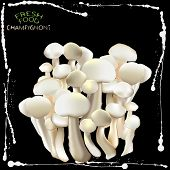 picture of crimini mushroom  - an illustration of a label with bunch of champignons different sized and shades of grey mushrooms on a separate black background with white ink splashes frame and fresh food champignons sign in the top left corner - JPG