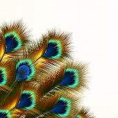 Fashion Background With Peacock Feathers