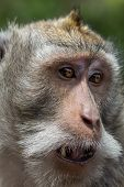image of monkeys  - One of the crab - JPG