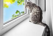 Cat Sits On A Windowsill