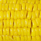 stock photo of corn-silk  - Closeup Grains of ripe yellow color corn - JPG