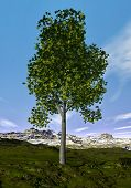 Ohio buckeye tree - 3D render