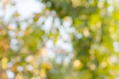 Defocus of  Green nature bokeh ,blurred background