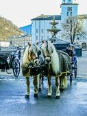 pic of harness  - Two horses harnessed to the carriage at winter in Salzburg Austria - JPG