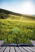 Beautiful Landscape Wheat Field In Bright Summer Sunlight Evening With Added Lens Flare Filter