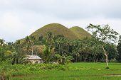 Chocolate Hills And Farmer House
