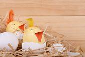 Two Easter Egg Chicks