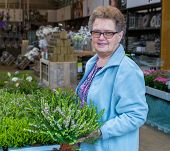 Elderly woman buying heather in garden shop