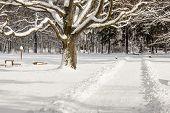 Winter Landscape - Swierklaniec, Park. Poland.